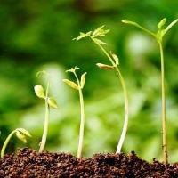 Aplicação dos Princípios Bíblicos e o Crescimento